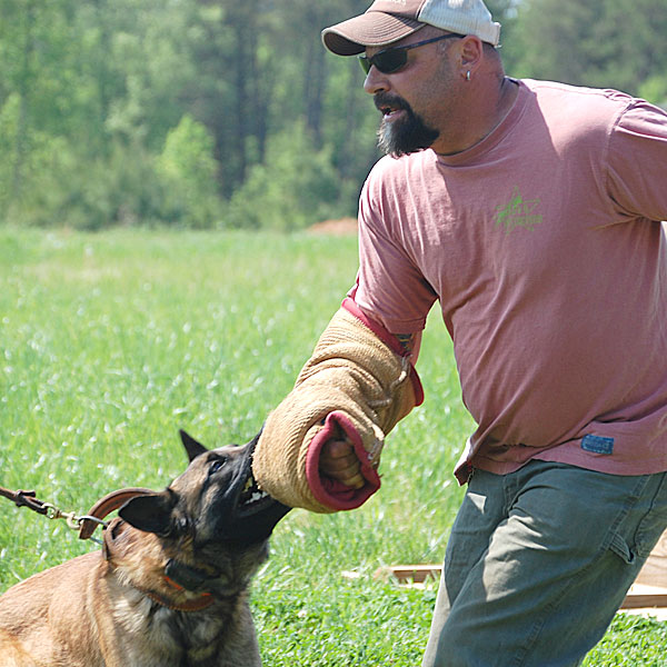 Master Dog Trainer, Andy Hanellin, works with a protection dog on the training field.