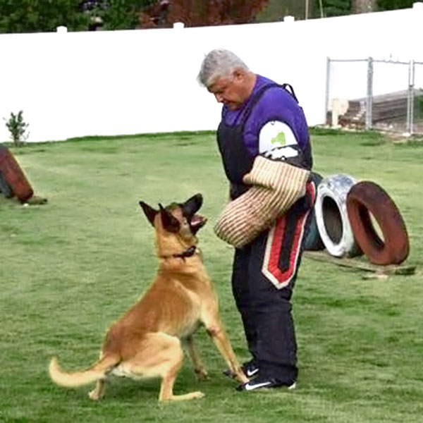 Protection Training with Paladin Executive Protection Dogs